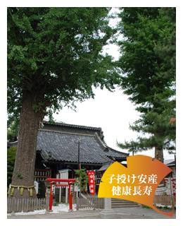 埼玉県 鴻神社 子授け安産 夫婦銀杏